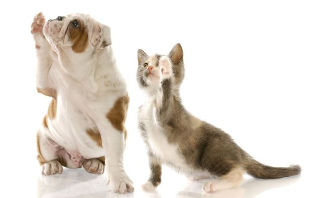 7427508 m The First Pet Store 100% Dedicated to Animals at LAs City Shelters