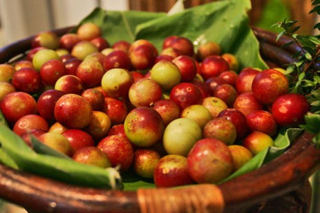 camu camu superfruit